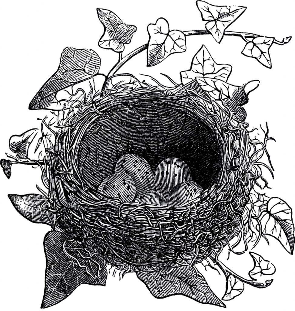 Antique Bird Nest Illustration