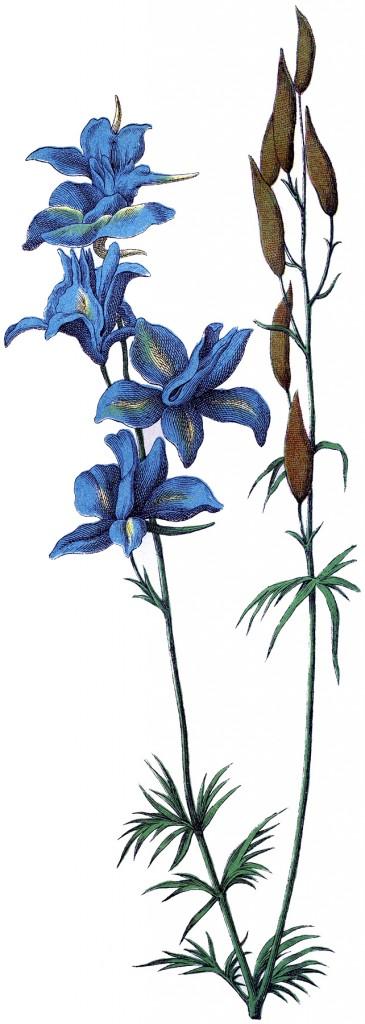 Delphinium Flower Image