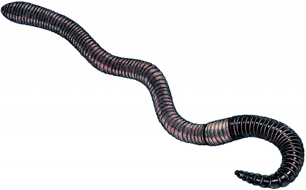 Vintage Earth Worm Image