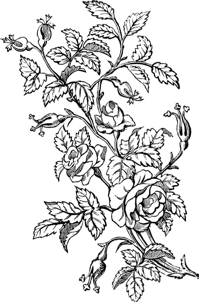 Ornamental Roses Design