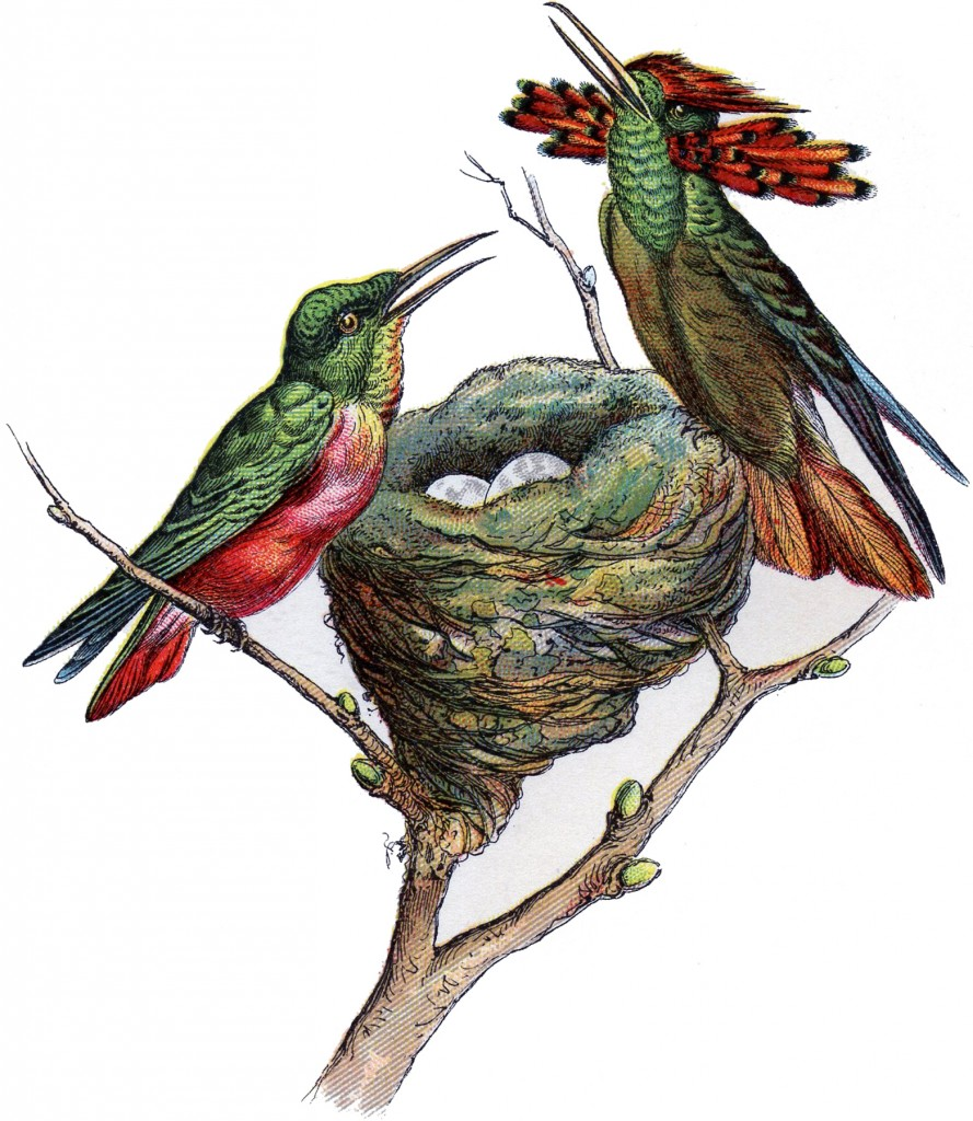 Vintage Hummingbird Image