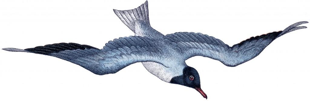 Vintage Seagull Image