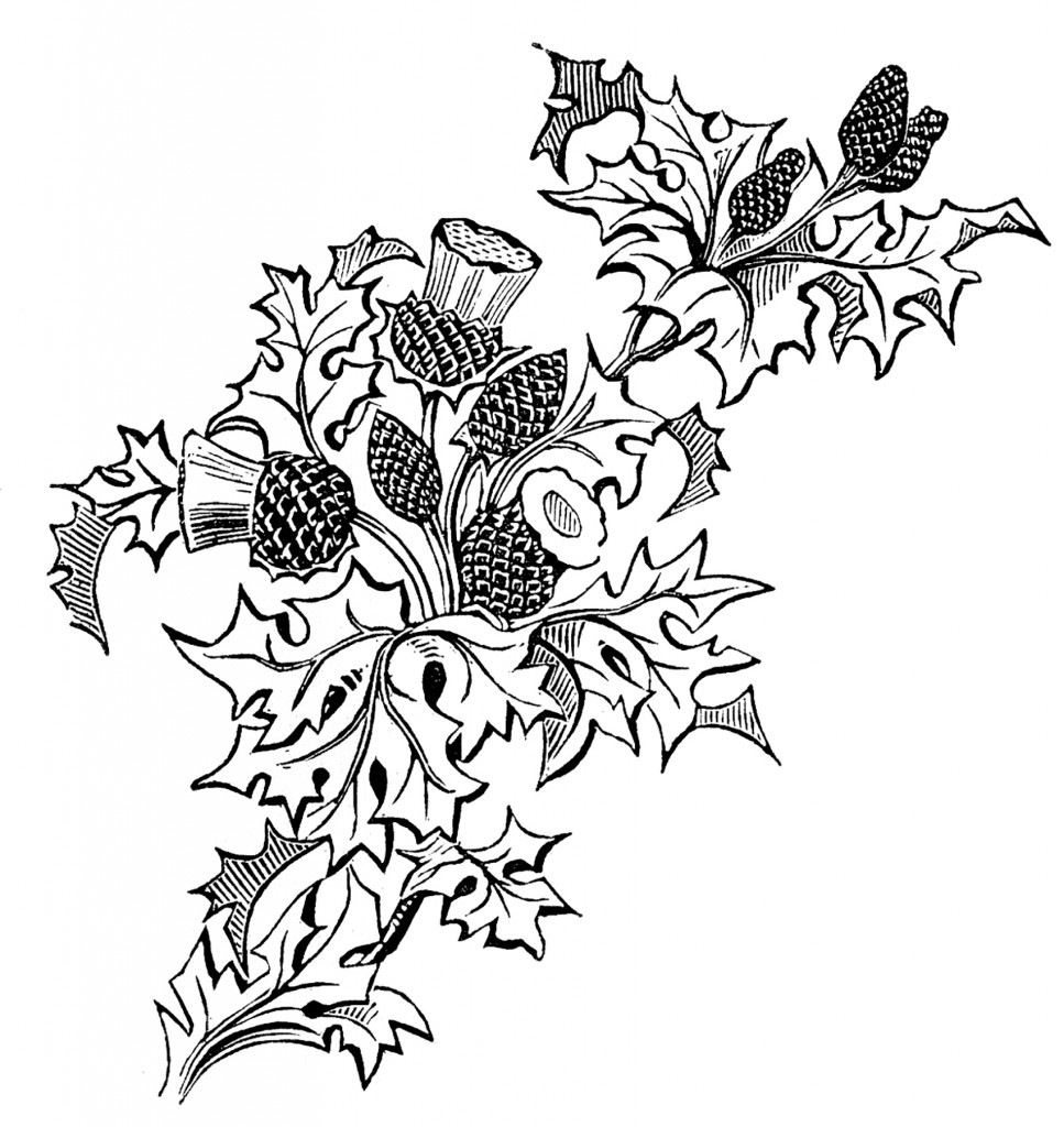 vintage thistle picture embroidery pattern the