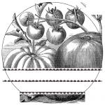 2x2_tomatoes