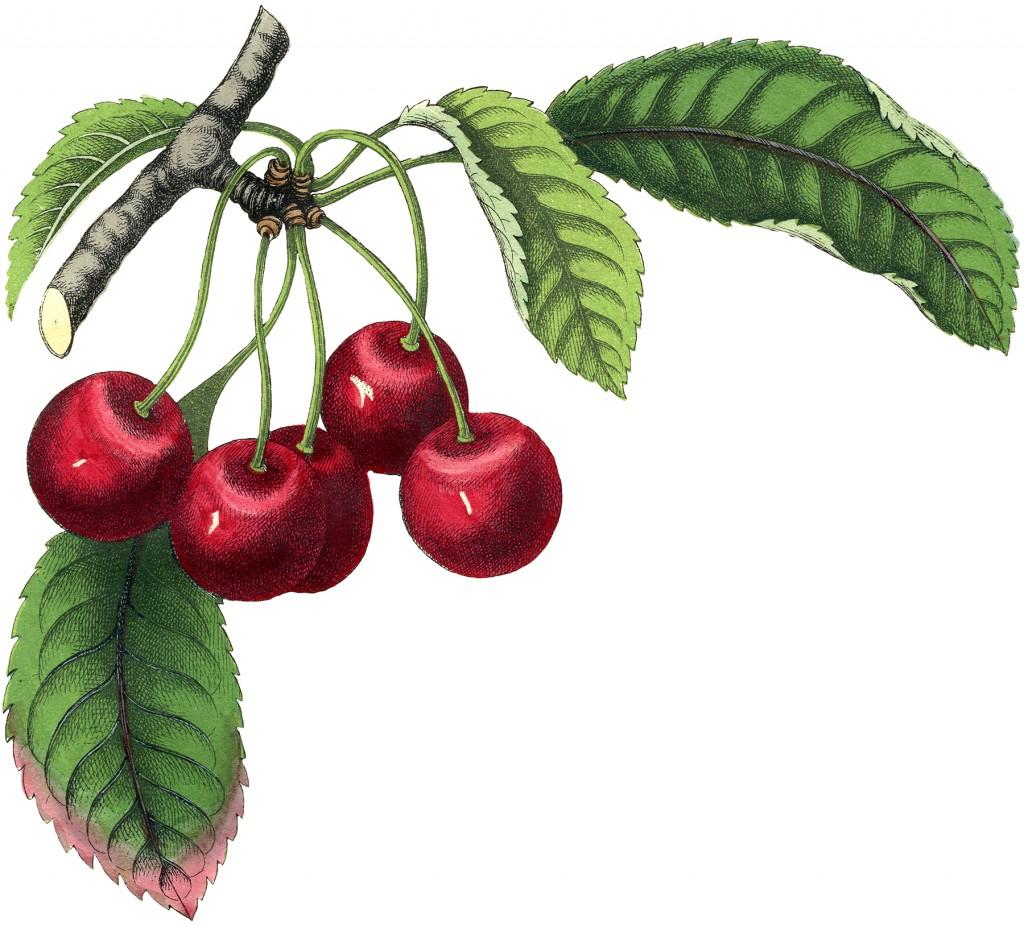 Best Vintage Cherries Image
