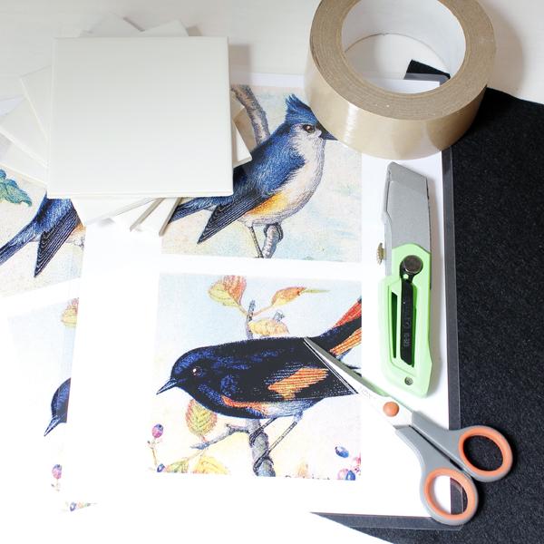 BirdCoasters-1