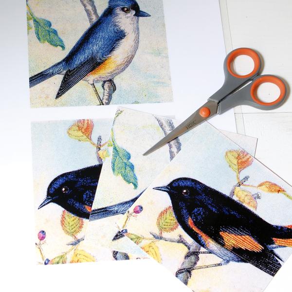 BirdCoasters-2