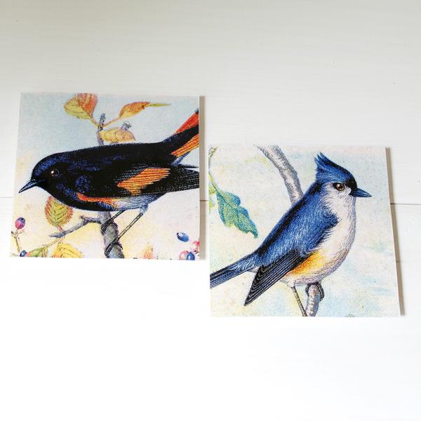 BirdCoasters-4
