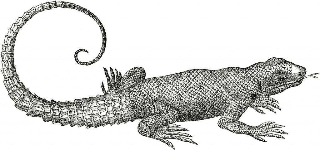 Free Vintage Lizard Clip Art