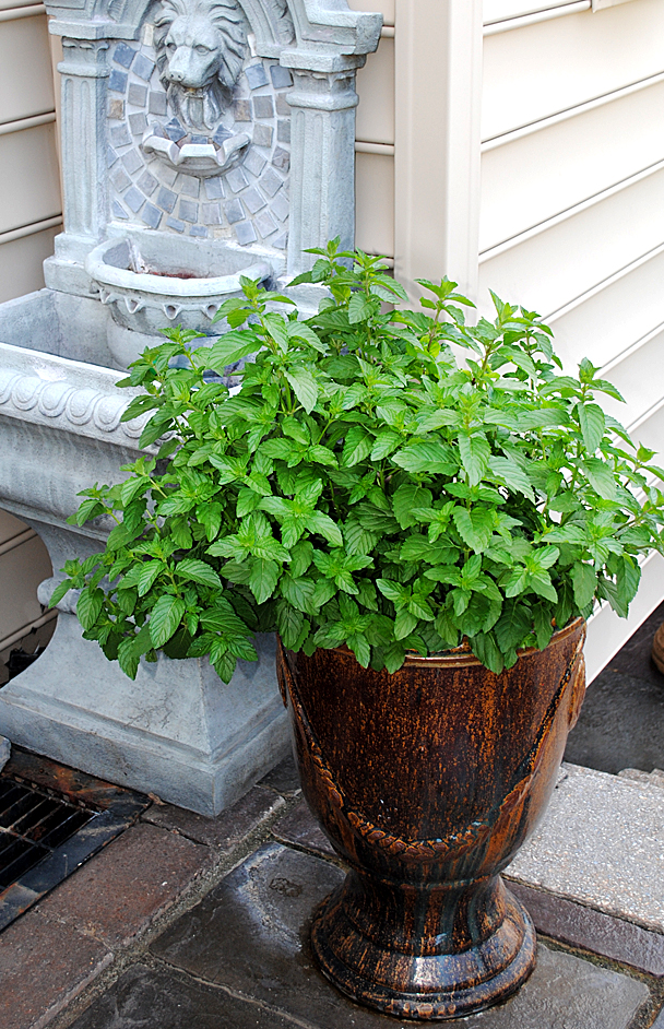 Herb Container Gardens