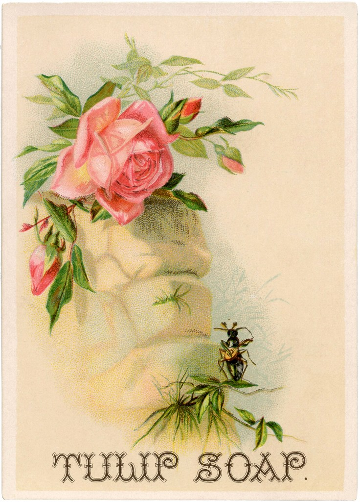 Pretty Pink Roses Card