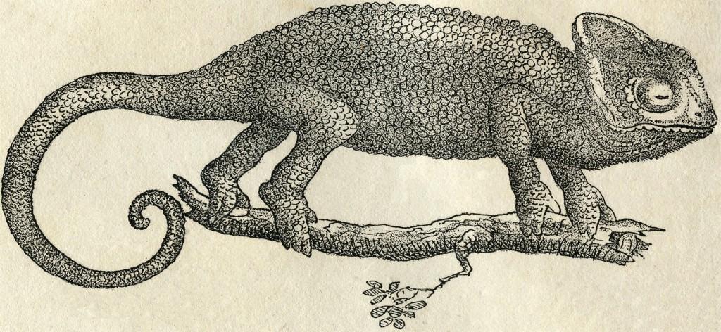 Vintage Chameleon Images