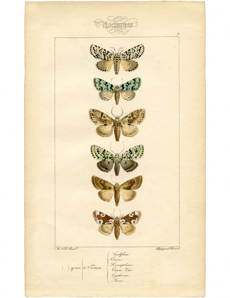 Vintage French Moth Printable