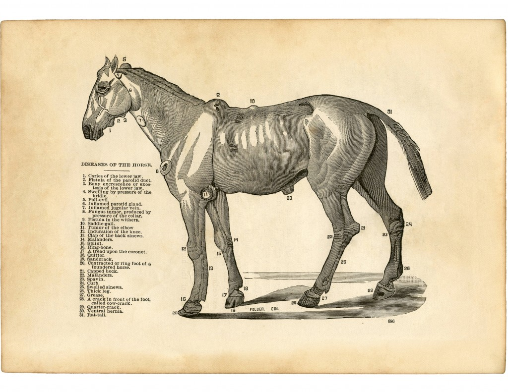 Vintage Horse Diseases Diagram