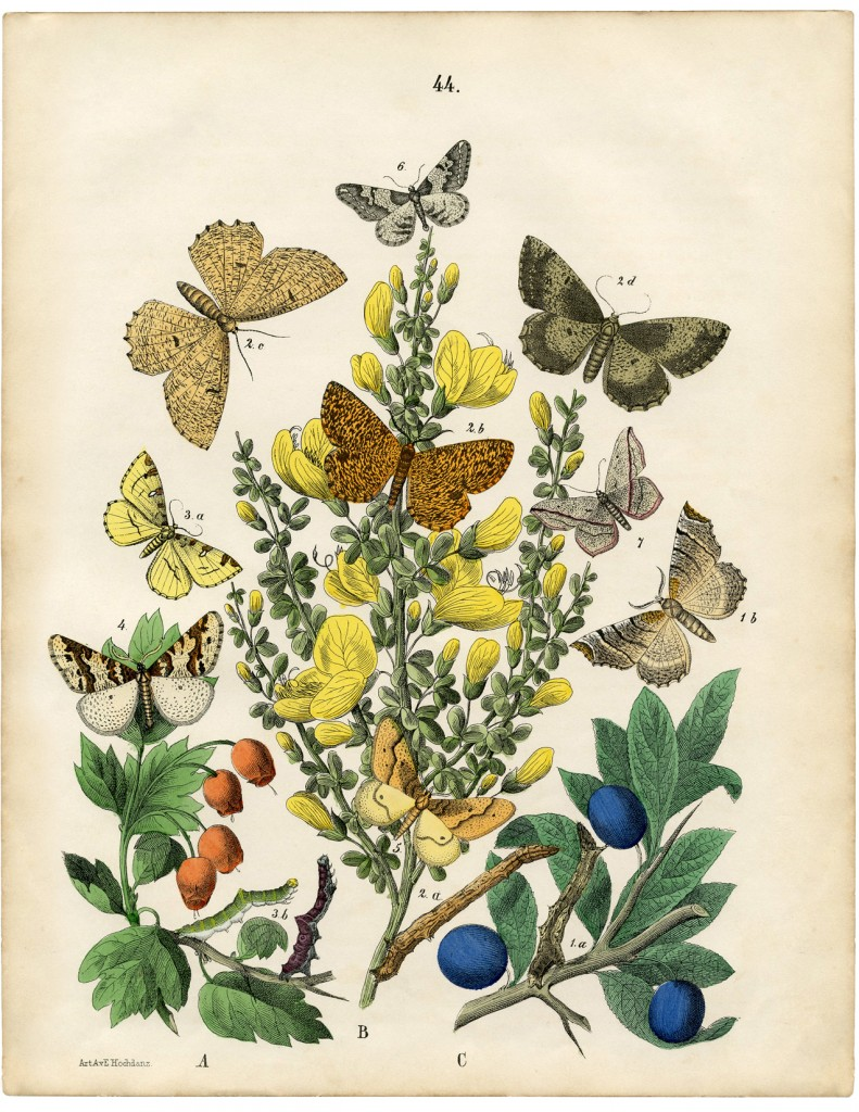 Vintage Printable Natural History