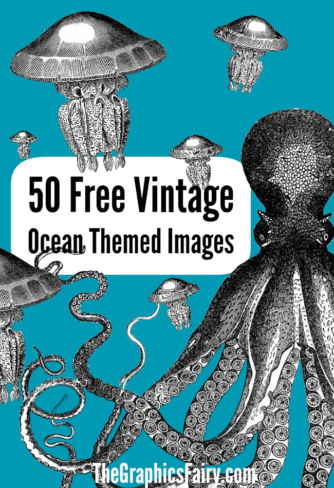 Free Public Domain Crab Image The Graphics Fairy