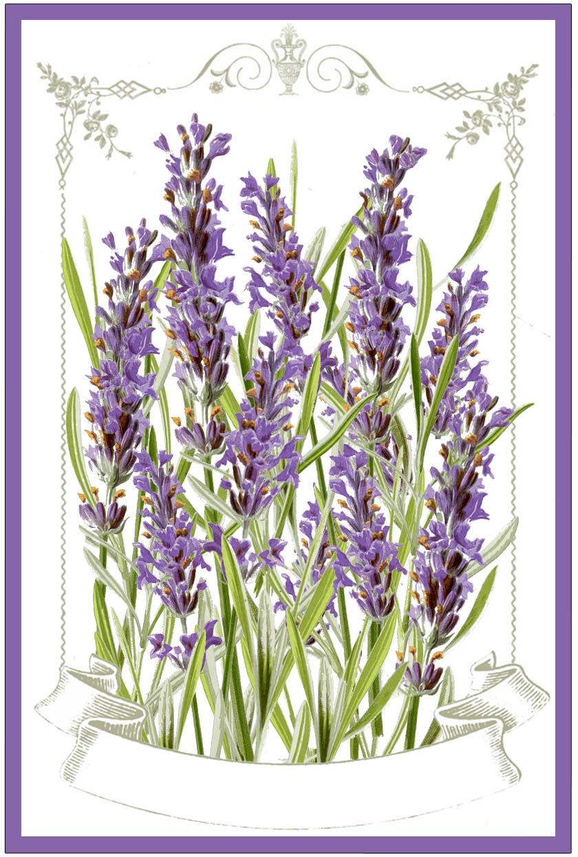 Free printable border designs for paper - Lavender Labels Printable The Graphics Fairy