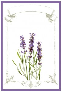 Lavender Labels Printable  //  The Graphics Fairy