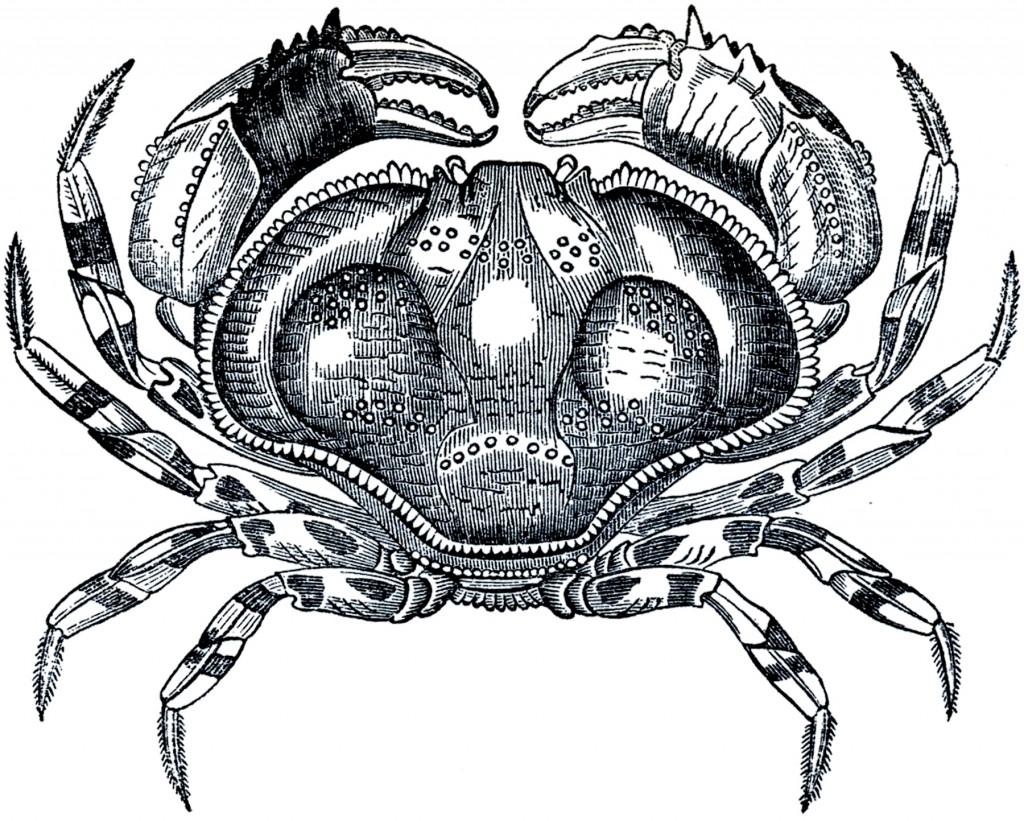 Free Public Domain Crab Image