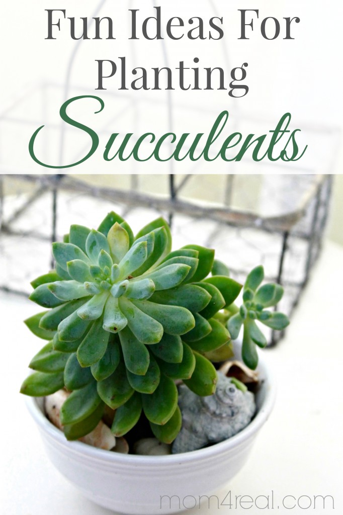 Fun Ideas for Planting Succulents