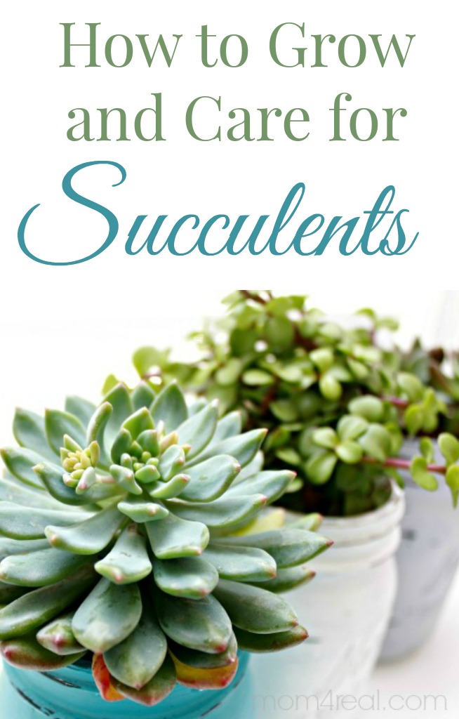 How-to-Grow-and-Care-for-Succulents