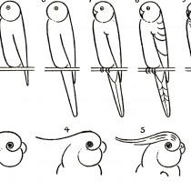 Learn to Draw Parrots