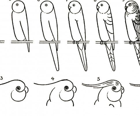 Learn to Draw Parrots!