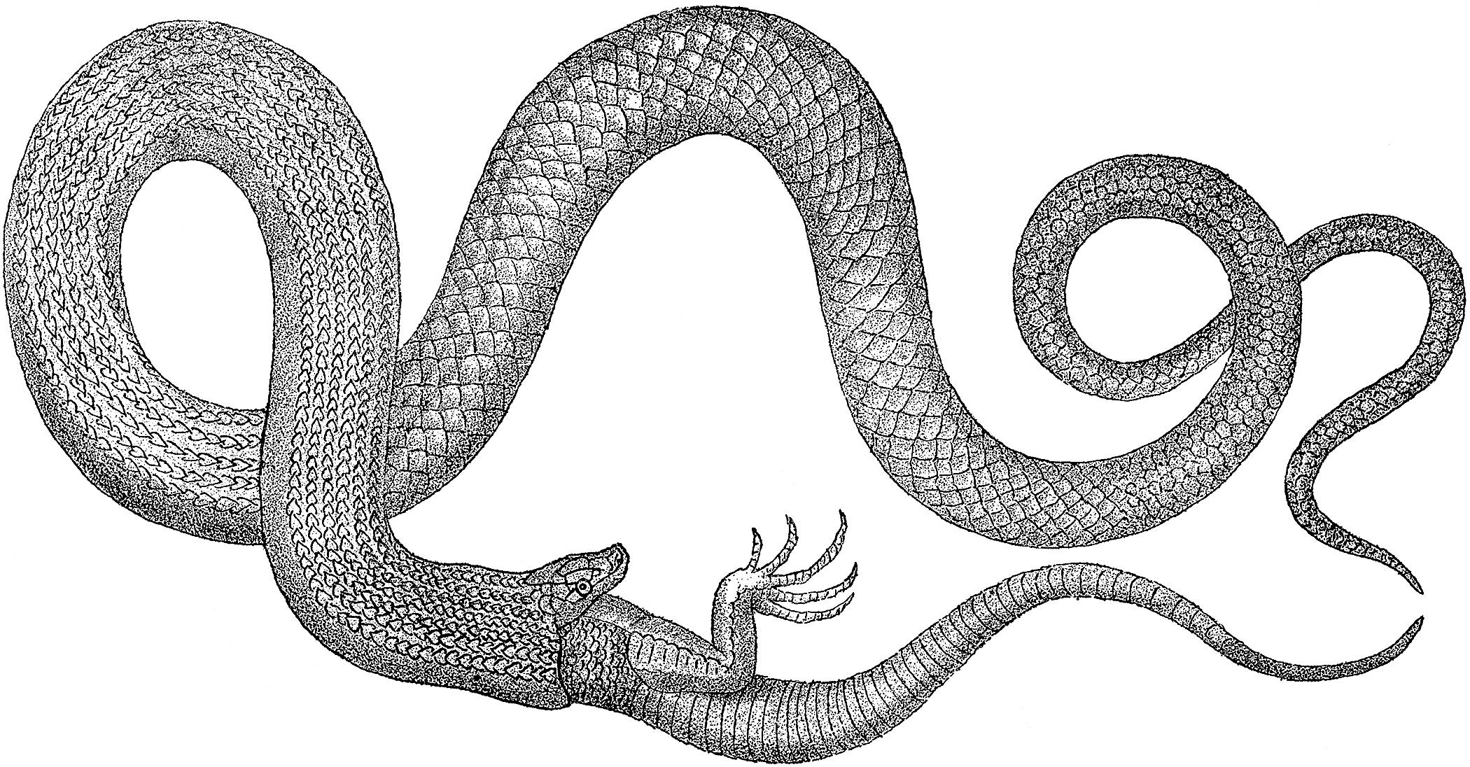 Snake Original Drawing