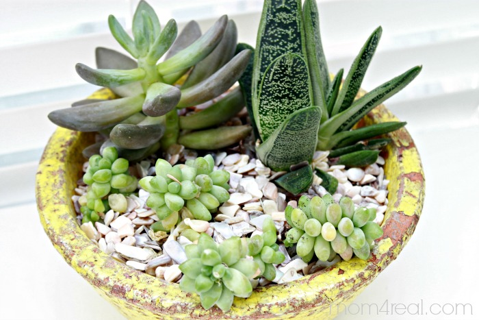 Ideas for planting succulents the graphics fairy for Soil for succulents
