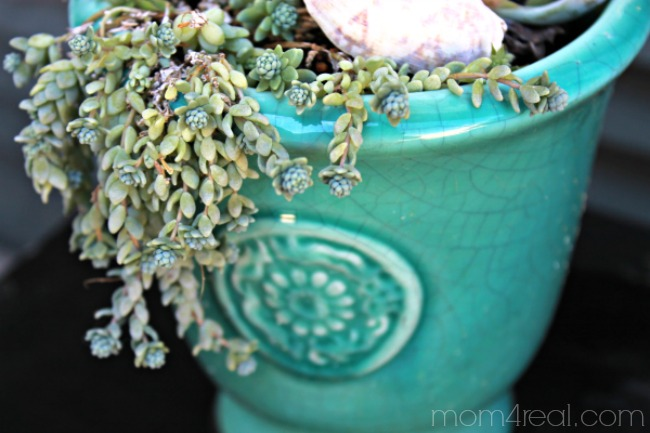 Trailing Succulent in Turquoise Pot