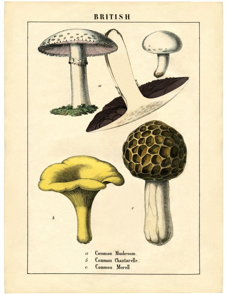 Vintage Mushrooms Printable