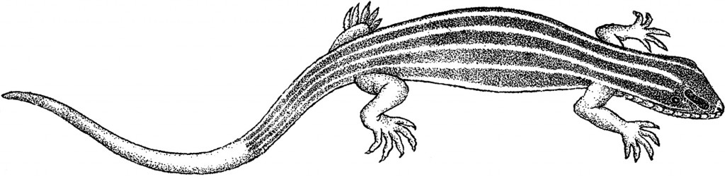 Vintage Striped Lizard Image