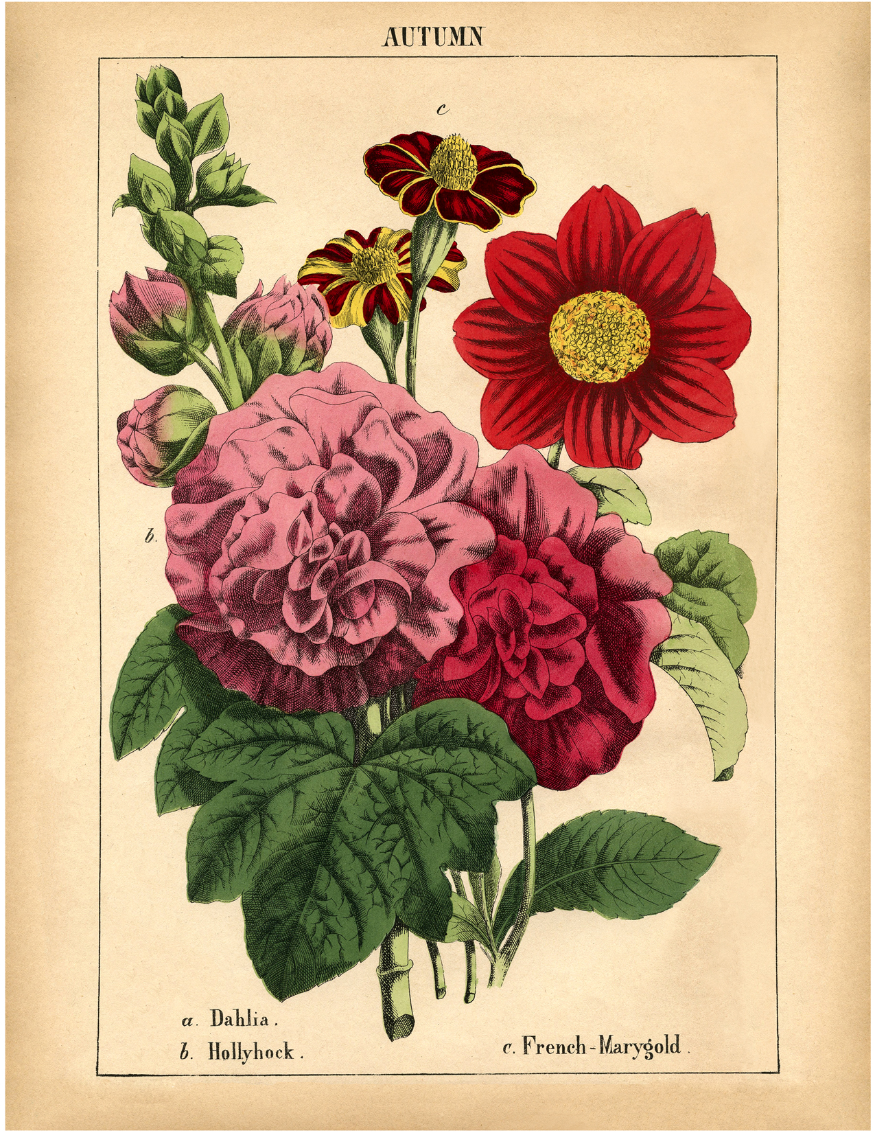 Handy image with printable of flowers