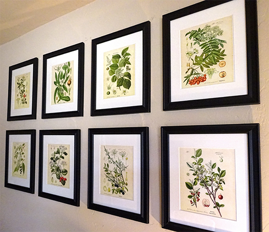 Botanical Art Gallery - Reader Featured Project