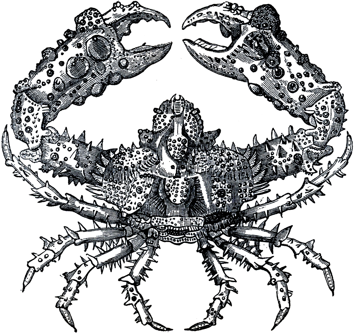 Free Crusty Crab Image - The Graphics Fairy