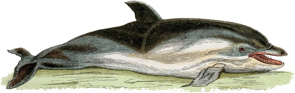Free Vintage Dolphin Image