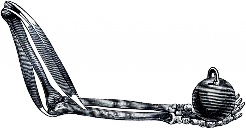 Halloween Skeleton Arm