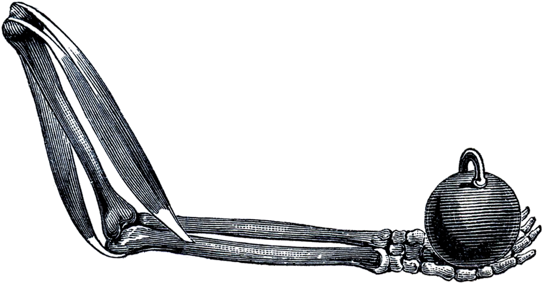 Halloween Skeleton Arm The Graphics Fairy