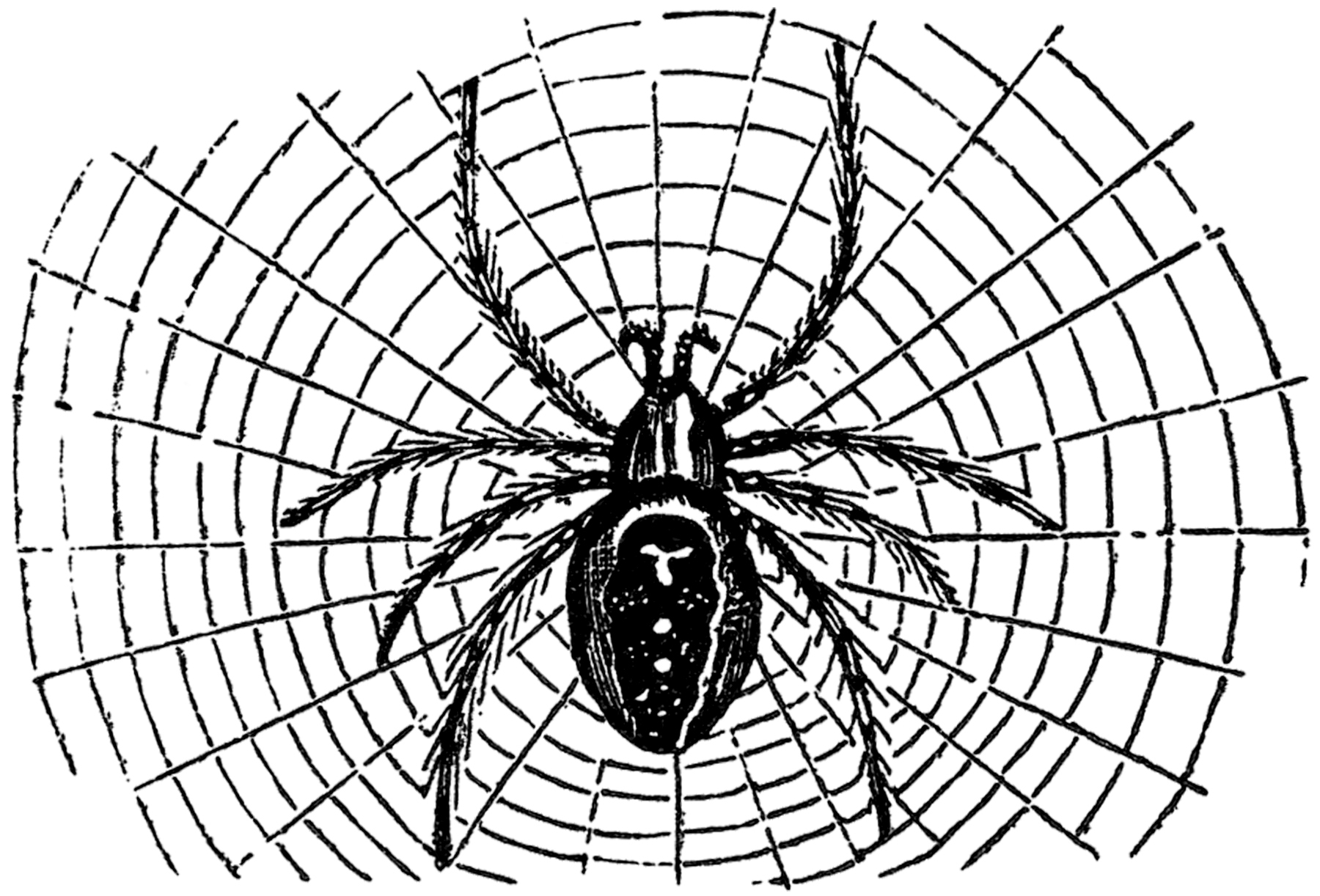 vintage halloween spider image the graphics fairy web clip art png web clip art png