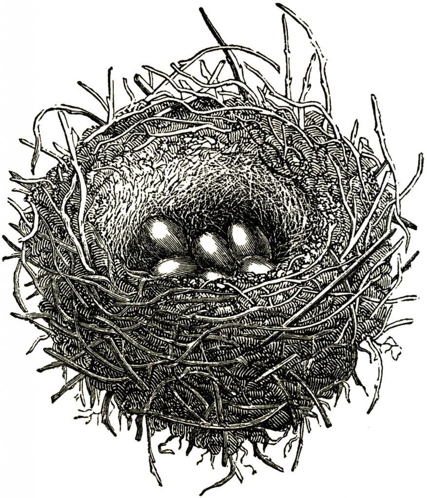 Public Domain Bird Nest Image