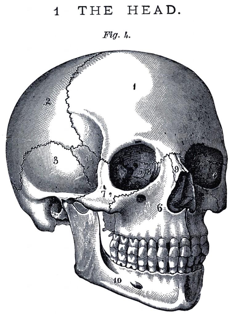 Vintage Anatomy Skull Image