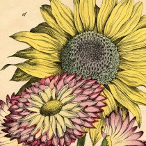 Vintage Sunflower Printable