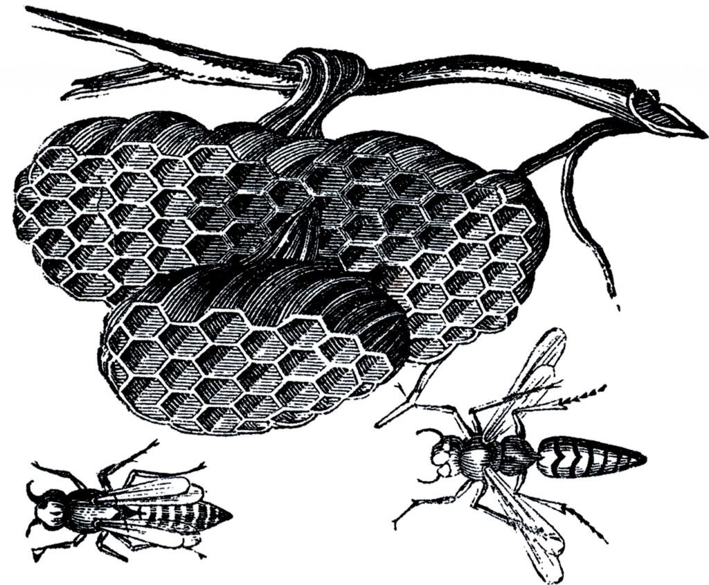 Vintage Wasp Nest Images