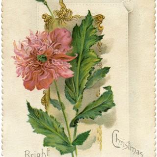 Christmas Flower Card Image
