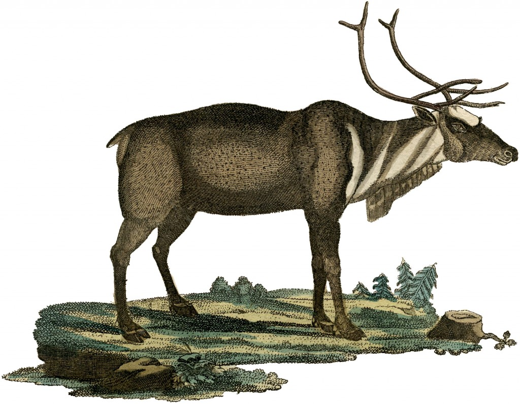 Early Reindeer Picture