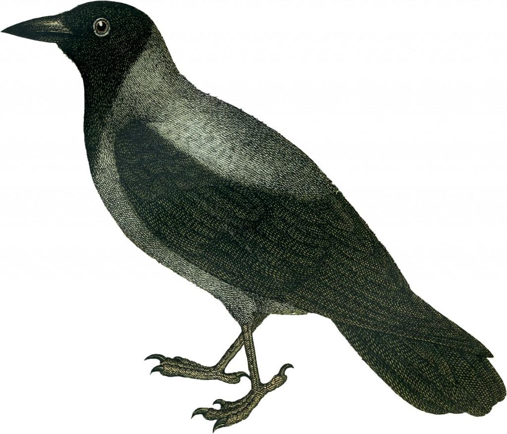 Halloween Crow Image