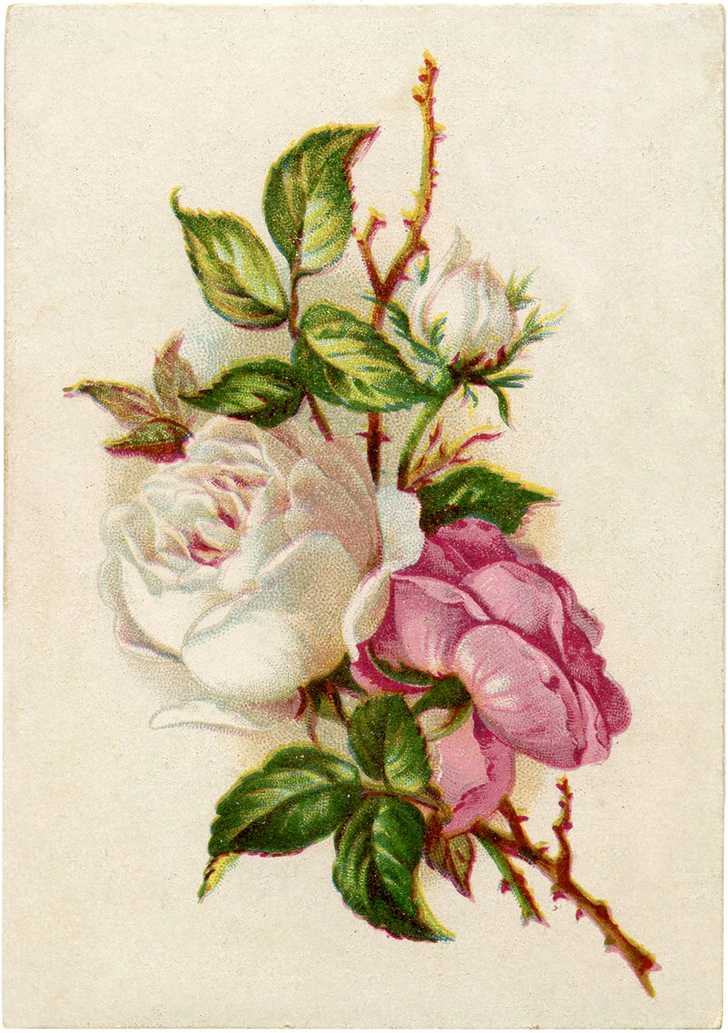 lovely roses digital freebie