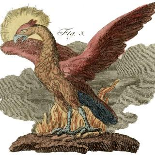Public Domain Phoenix Image