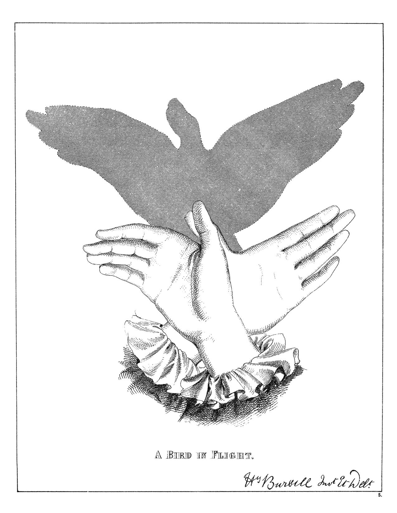 graphic regarding Printable Shadow Puppets called Typical Shadow Puppet Chicken Printable! - The Graphics Fairy