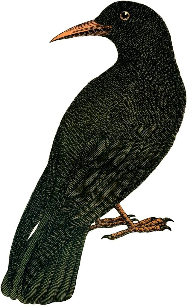 Vintage Crow Picture